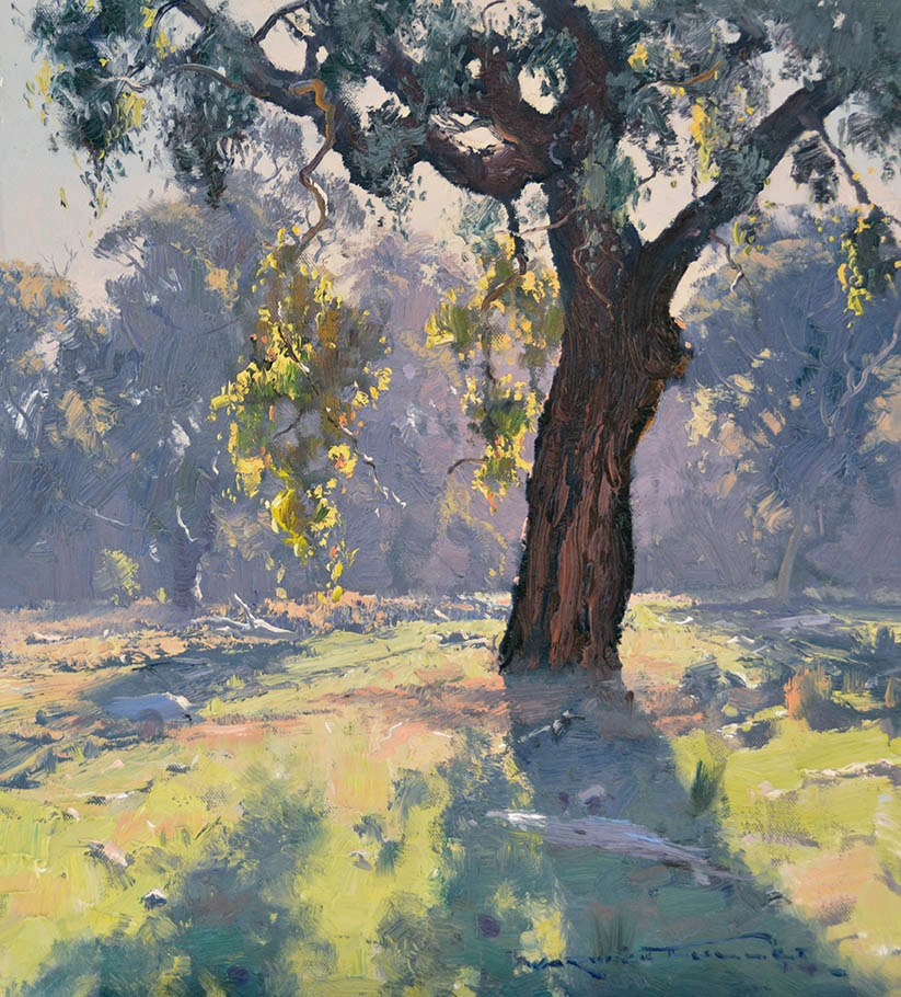 Ironbark at Killymoon 50x45cm
