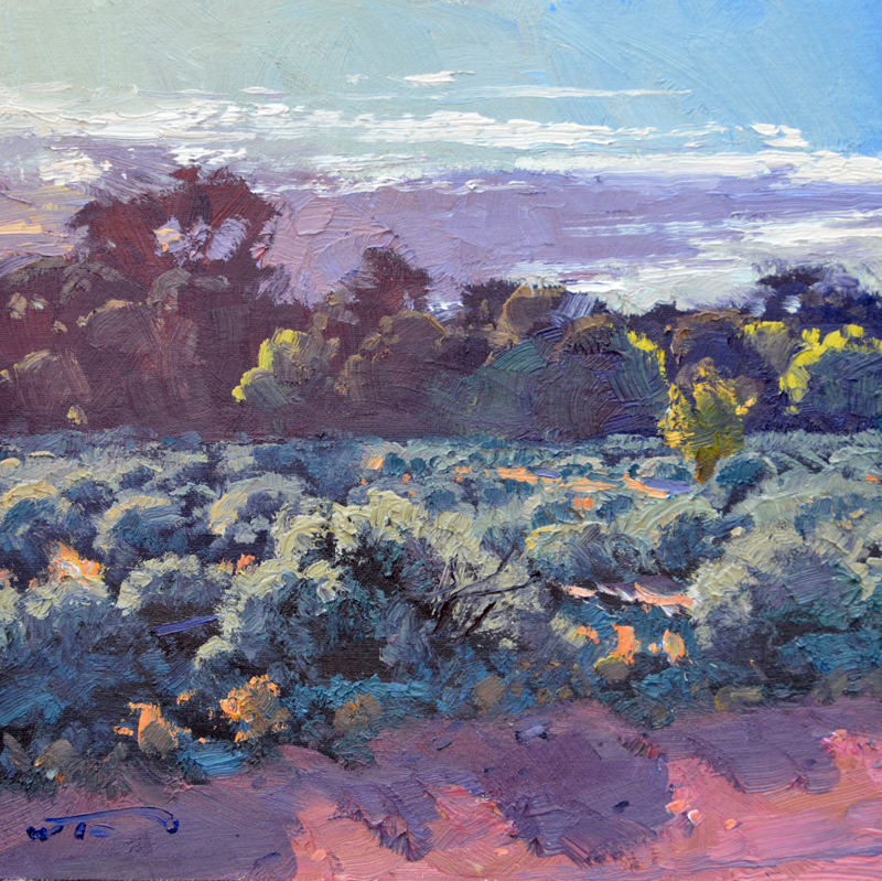 Morning Sun on Bluebush 30x30cm