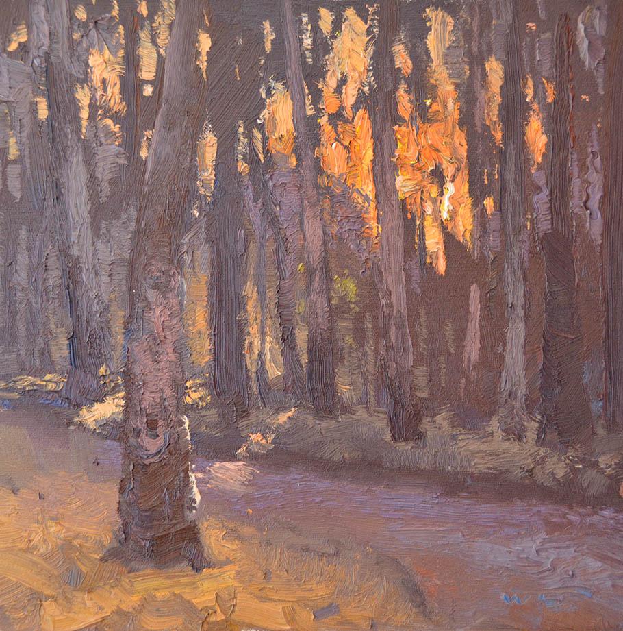 Forest Sunrise, Barmah 30x30cm