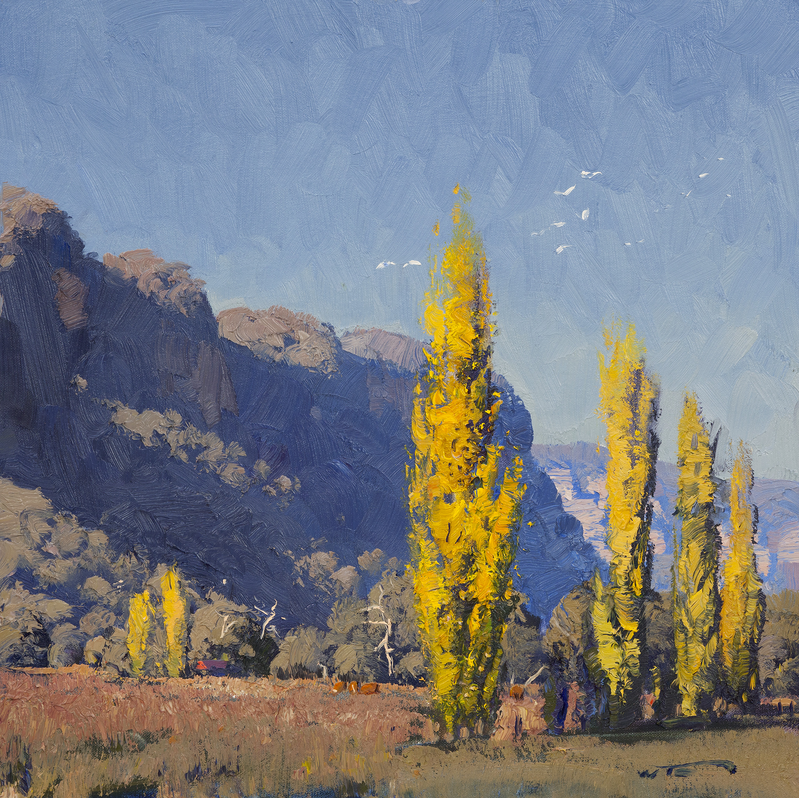 Cockatoos & Poplars Capertee Valley 45x45cm